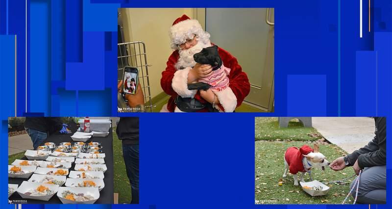 Images courtesy of The San Antonio Humane Society.