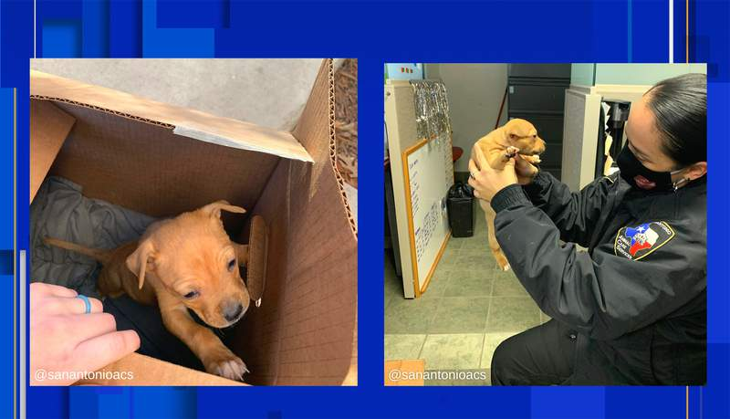 Images courtesy of Animal Care Services.