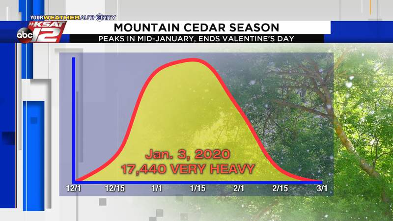Mountain cedar season runs from December through February, usually peaking in mid-January.