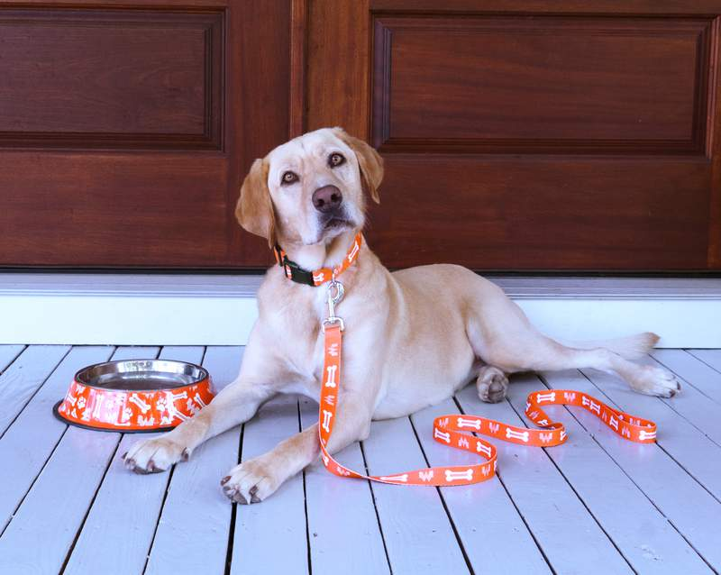 Whataburger is set to launch a pet collection on Wednesday for National Dog Day.