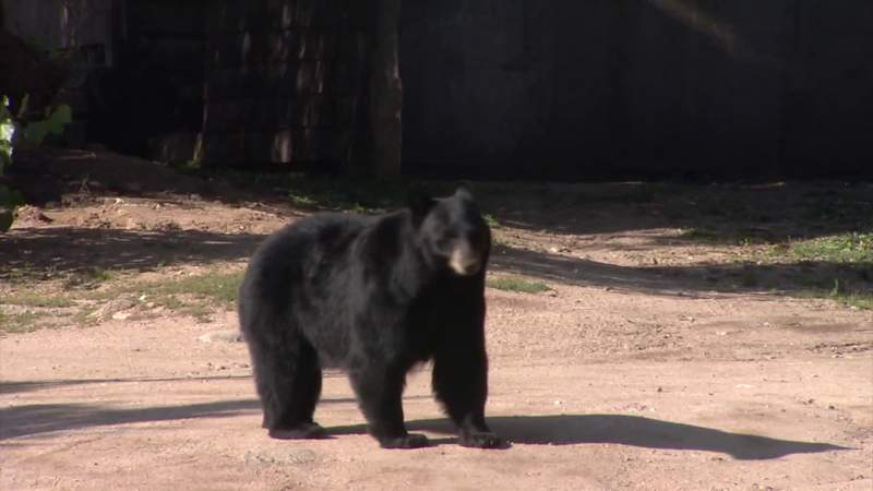Colorado woman found dead from apparent bear attack