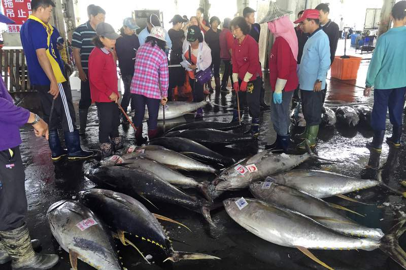 FILE - In this March 31, 2016 file photo, fishermen and buyers gather at a tuna auction at Donggang fishery port in Taiwan. The United States is halting imports from a Taiwan-based fishing vessel that reportedly has supplied the global tuna trading company that acquired Bumble Bee Seafoods this year. The Trump administration acted after reports of abusive conditions and forced labor.  (AP Photo/Johnson Lai)