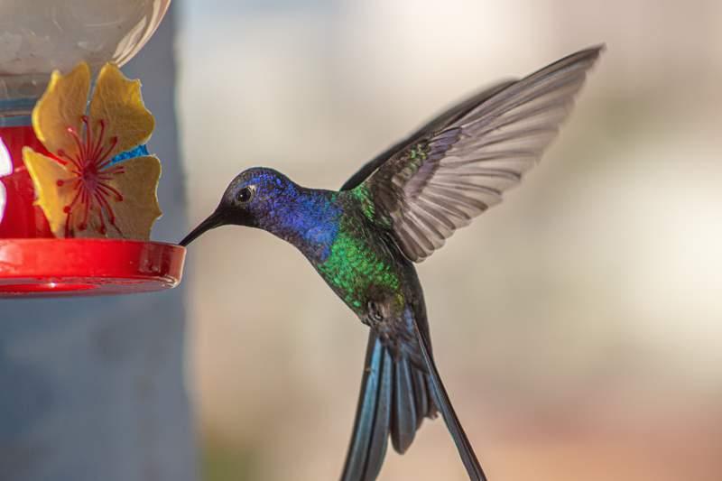 Hummingbird at a feeder.