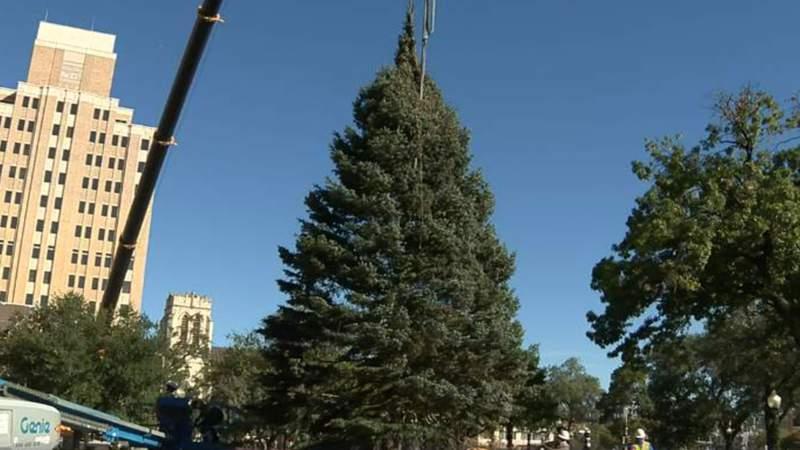San Antonio's 2020 Christmas tree arrives at Travis Park