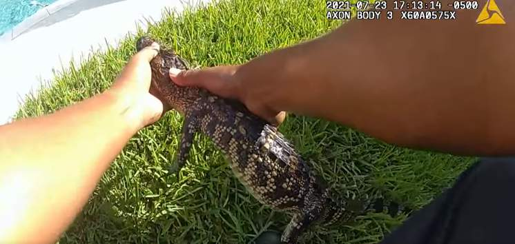 An alligator had quite the afternoon getaway after it was found swimming in a Texas family's hot tub earlier this week.