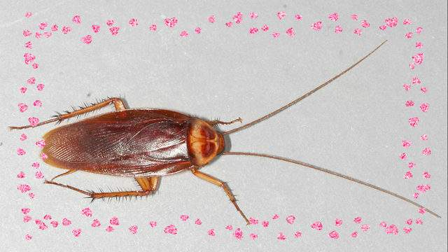 Name a cockroach after your ex this Valentine's Day.