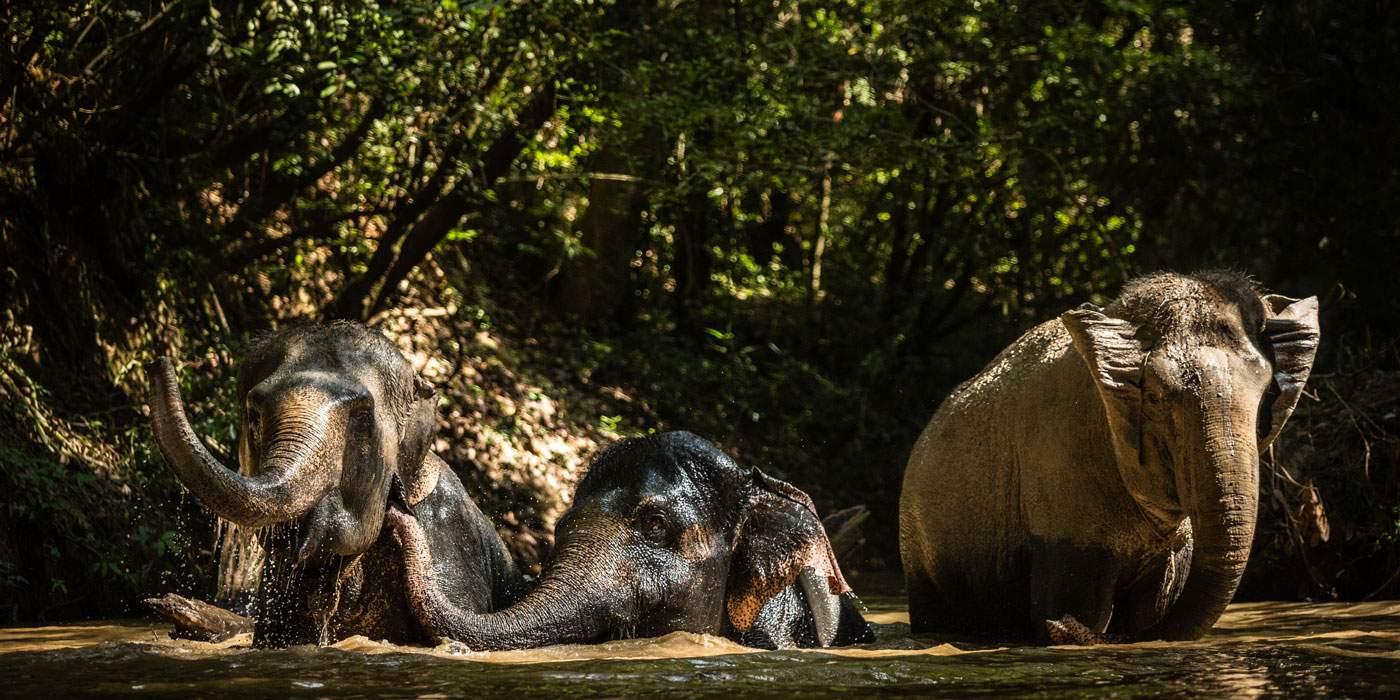 Zoo Plays April Fool's Joke on Media