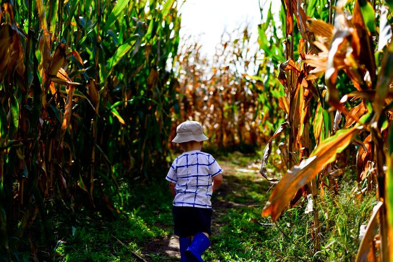 Corn mazes are coming to South and Central Texas!