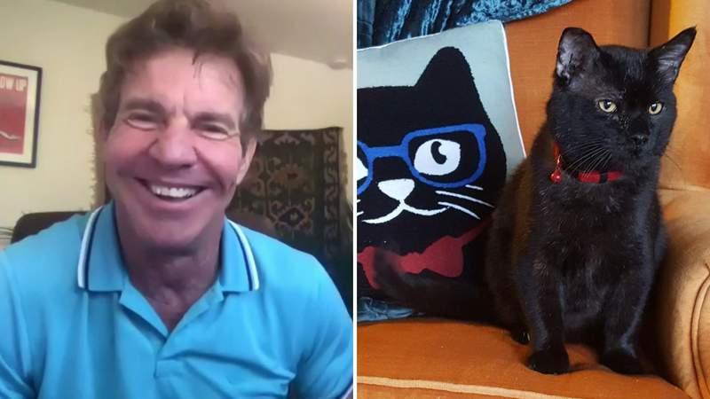 Dennis Quaid adopts Dennis Quaid (the cat) in Lynchburg, Virginia