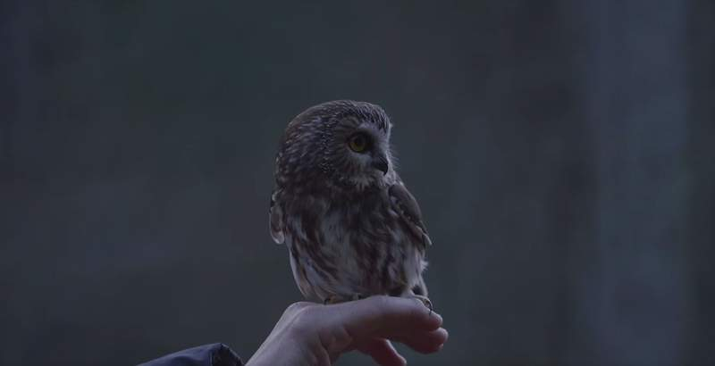 Rocky the adorable little owl is back to full health and returned to the wild.