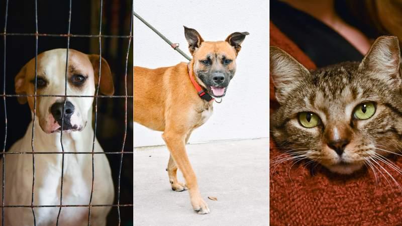 San Antonio Pets Alive! has animals up for adoption for $10.