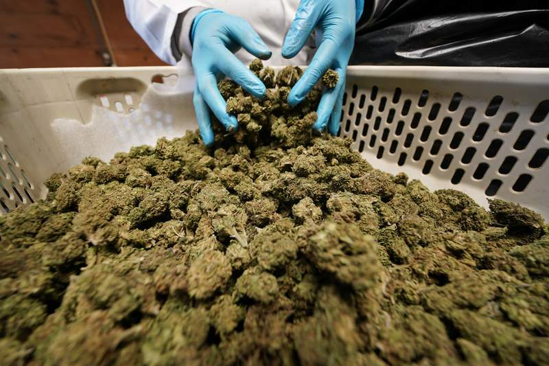 'A big step': New law will allow Texans with PTSD to enroll in state medical marijuana program