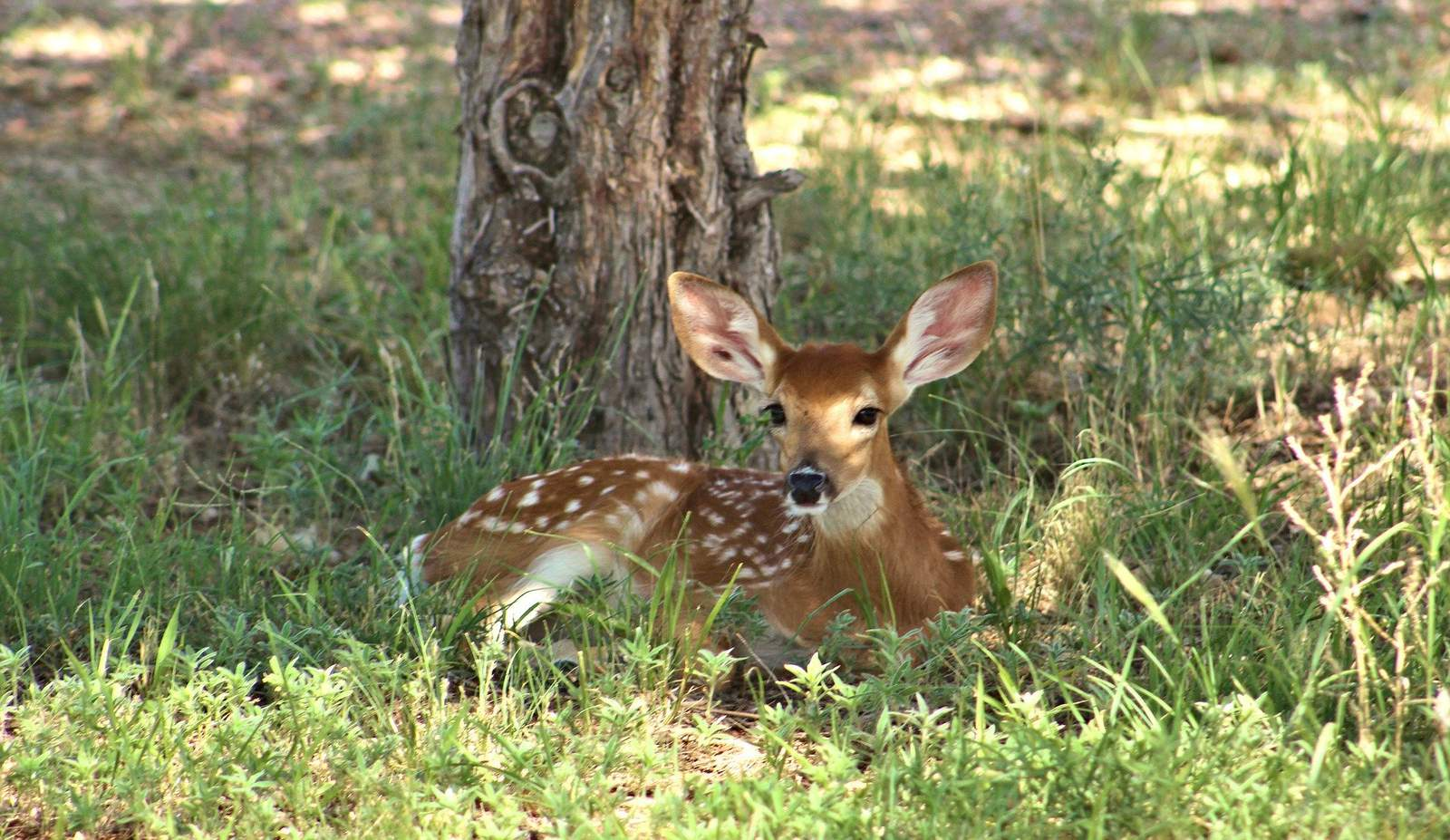 """Do not touch """"orphaned"""" or """"abandoned"""" animals, warns Texas Parks & Wildlife"""