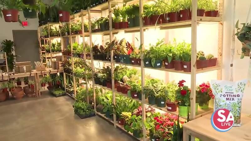 Inside Tillage: over 400 plant species under one roof north of downtown San Antonio | SA Live | KSAT 12
