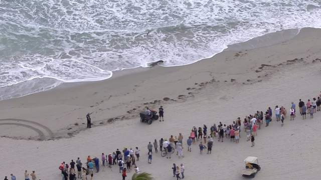 The crowd quickly grew as word spread about a crocodile on the beach.
