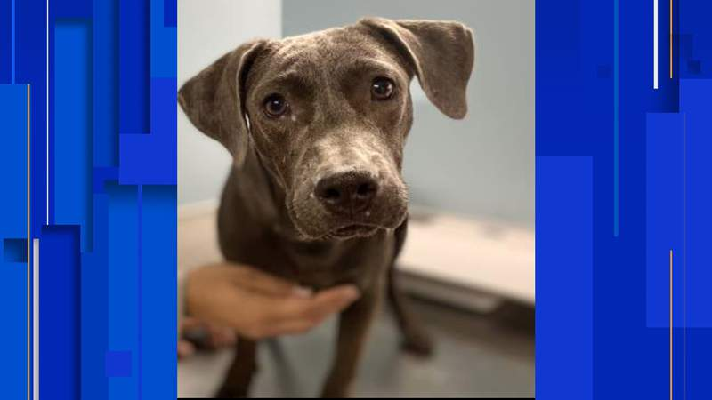Tammi was officially adopted Thursday, Dec. 10, according to the San Antonio Humane Society.
