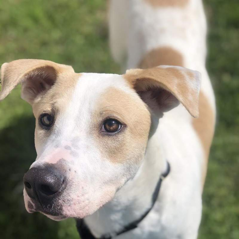 Darry, one of the dogs heading to Virginia to get adopted.