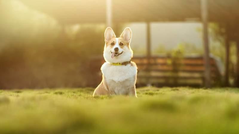 Generic dog photo