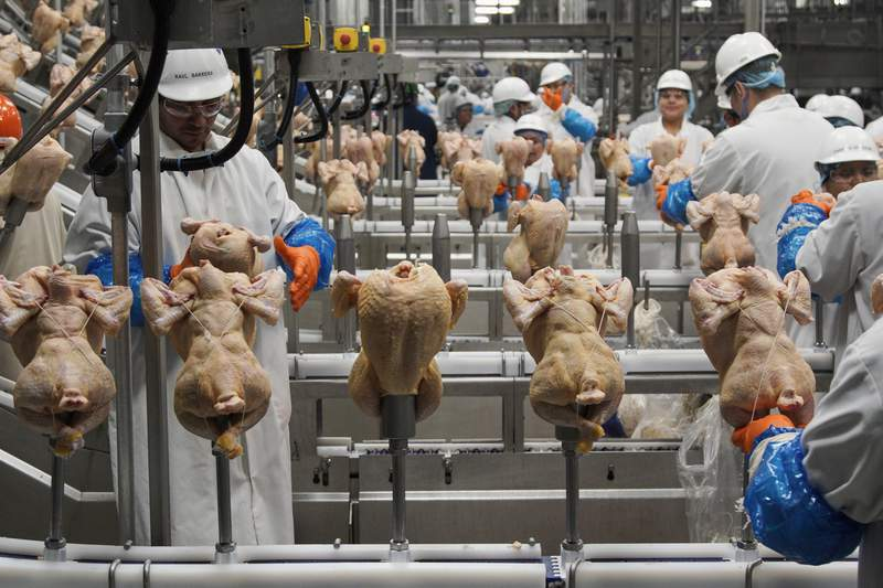 FILE - In this Dec. 12, 2019, file photo workers process chickens at the Lincoln Premium Poultry plant, Costco Wholesale's dedicated poultry supplier, in Fremont, Neb. U.S. wholesale prices rose 0.3% in August 2020, just half the July gain, as food and energy prices decline. The Labor Department said Thursday, Sept. 10 that the August advance in the producer price index  which measures inflation before it reaches consumers  followed a 0.6% surge in June which was the biggest monthly gain since October 2018.  (AP Photo/Nati Harnik, File)