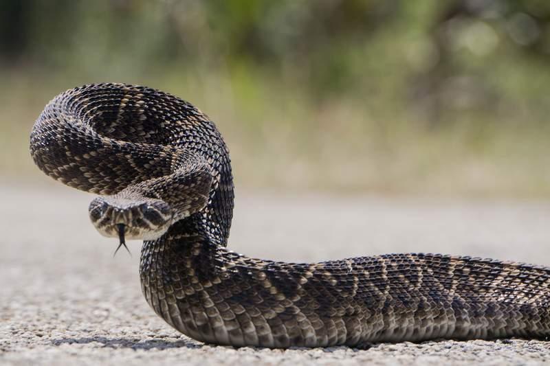 Snake Snake Facts
