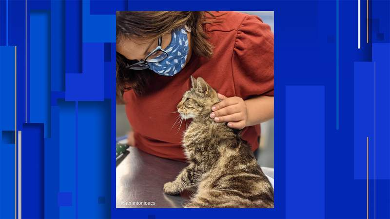 Image courtesy of San Antonio Animal Cares Services.