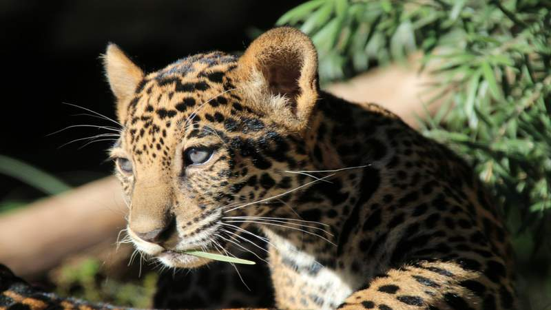 San Antonio Zoo is hiring, more than 100 jobs available