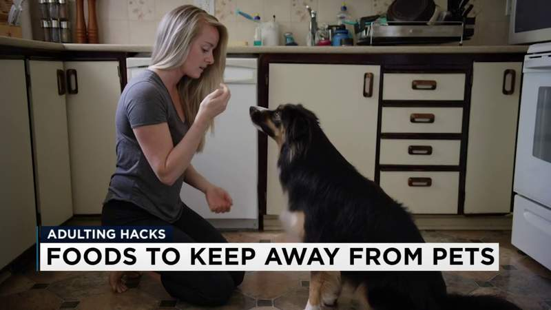 Adulting Hacks: Keep these foods away from your furry friends