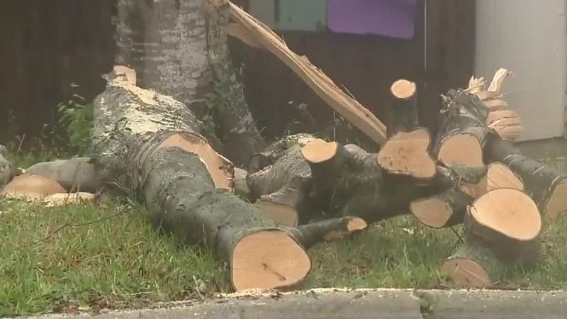 High winds leave downpour of damage in one San Antonio neighborhood