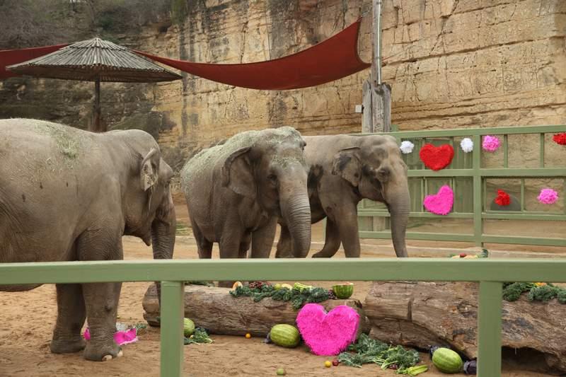 San Antonio Zoo celebrates elephant's 60th birthday