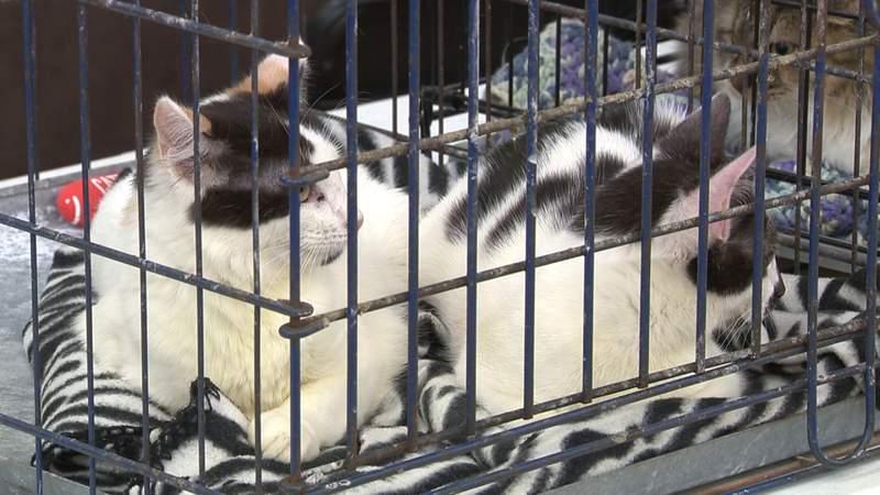 San Antonio Pets Alive makes 50,000th rescue