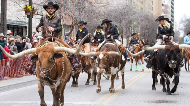 50 Longhorn Cattle Fill Streets Of San Antonio Saturday Morning