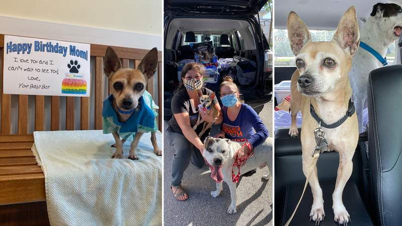 San Antonio woman reunited with dog missing for 6 years on her birthday