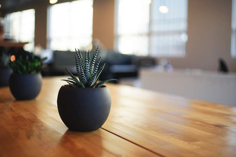 Indoor plants can spruce up your home in an instant.