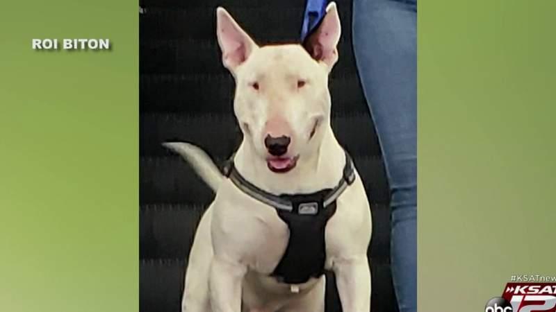 Combat veteran desperate for return of service dog, offering $20,000 reward