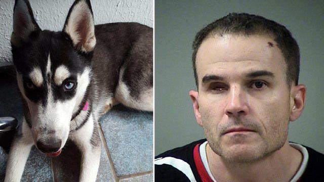 Police: Siberian husky stolen by white supremacist finds