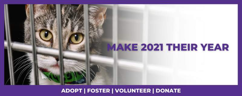 San Antonio Pets Alive adoption banner