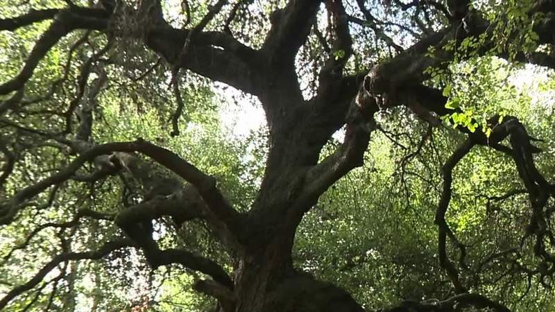 50 acres of land will be untouched, preserved indefinitely, UIW announces