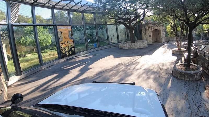 Social distancing at San Antonio Zoo