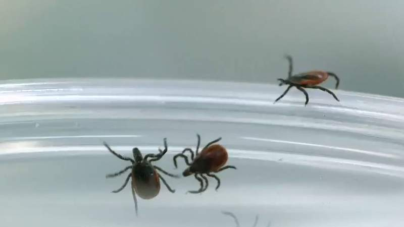 Here's how to protect against ticks and diseases they spread