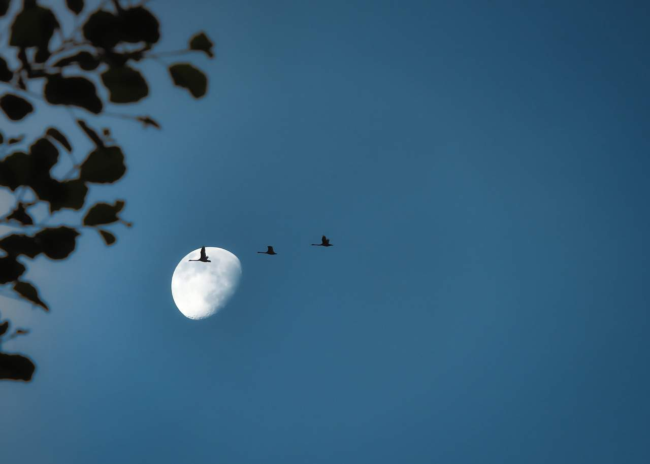 How can you help migrating birds across the state? Turn off your lights