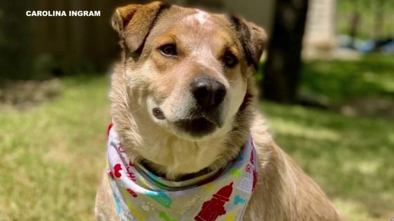 San Antonio pet parents find support and advice online during pandemic