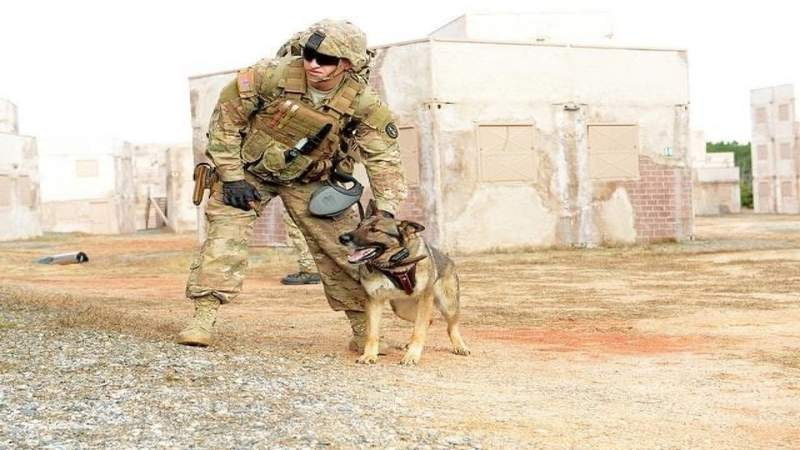 Army sergeant reunites with dog he served with in Iraq after spending two years apart
