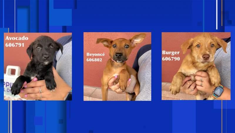 Images courtesy of San Antonio Pets Alive!