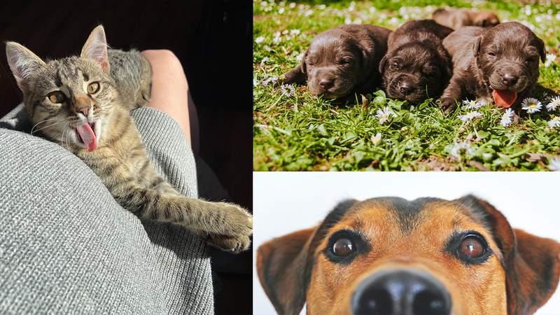 Purr-fect pet pictures
