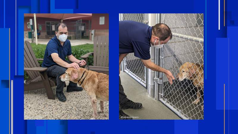 San Antonio dog owner shares tearful reunion with lab who went missing 10 years ago